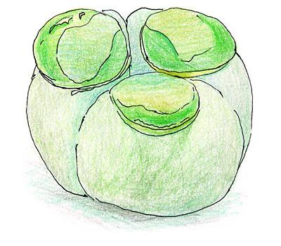 鶴屋吉信の『水藻』